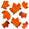 3 Magnet DIYs For Autumn Leaves