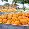 DIY Mason Jar Pumpkin Lids