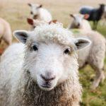 Magnetic Chute Separators Used in Animal Feeding