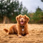 Dogs and Earth's Magnetic Field